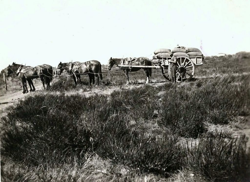Some times a dray was used to cart the grain to Tenindewa