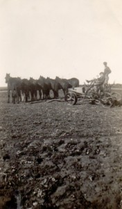 Mel's brothers with a horse team and plough