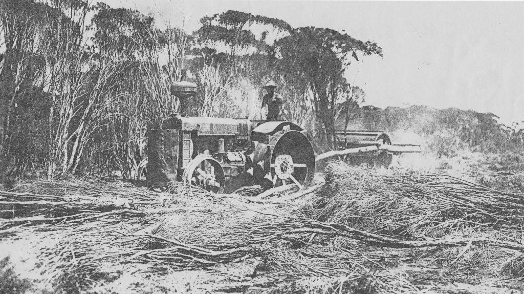 Jack Short scrub rolling on Kooyong Tenindewa 1930s